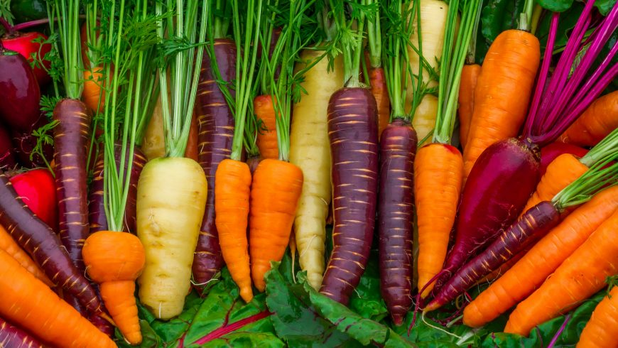 Do Carrots Help You See in The Dark – Vitamin A